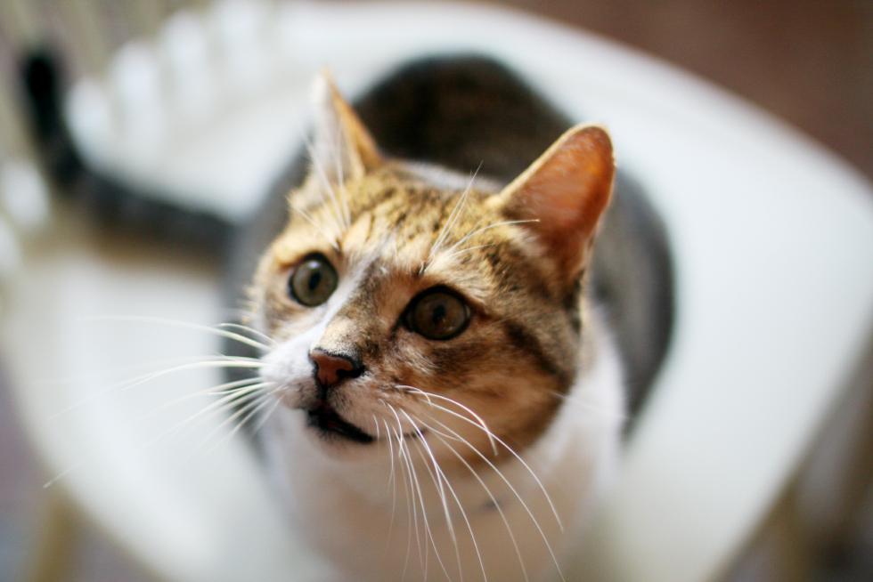 katten olle