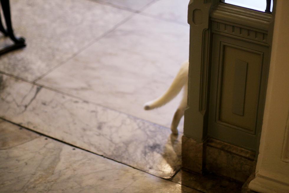 amsterdam III – klappa katter & dricka gt's