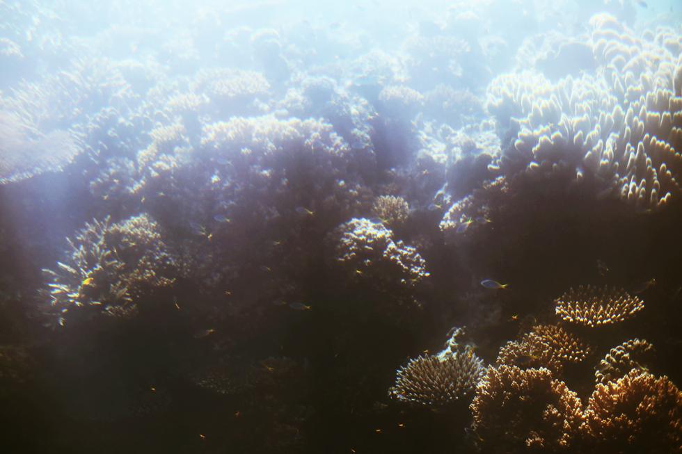 korall stora barriärrevet - sara edström24