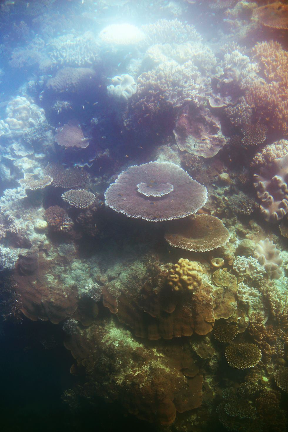 korall stora barriärrevet - sara edström26