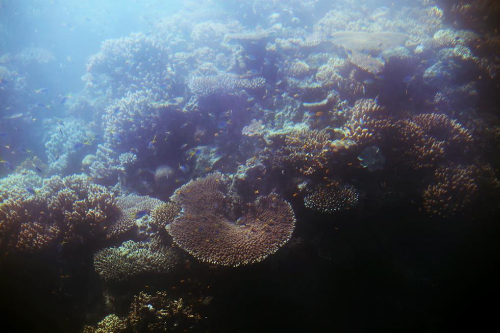 korall stora barriärrevet - sara edström30