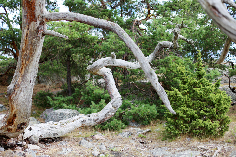 badutflykt-sara edström10