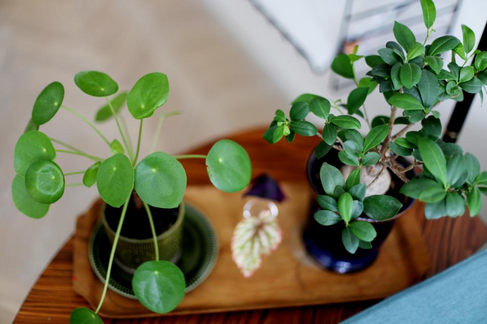 det gröna i vårt hem12