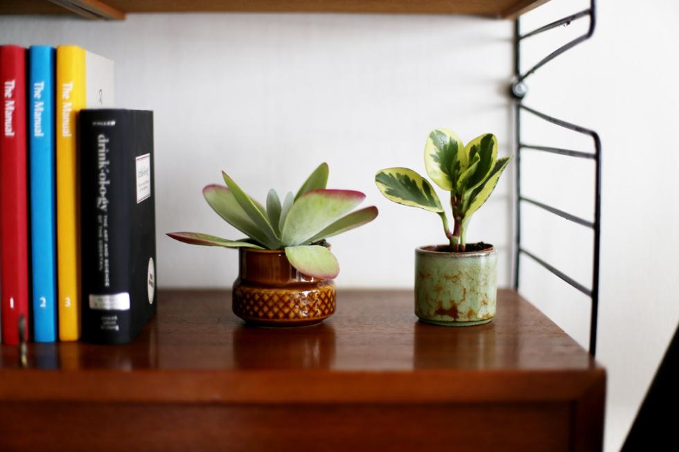 det gröna i vårt hem14