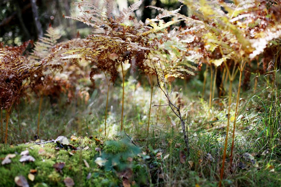 söndag i skogen10