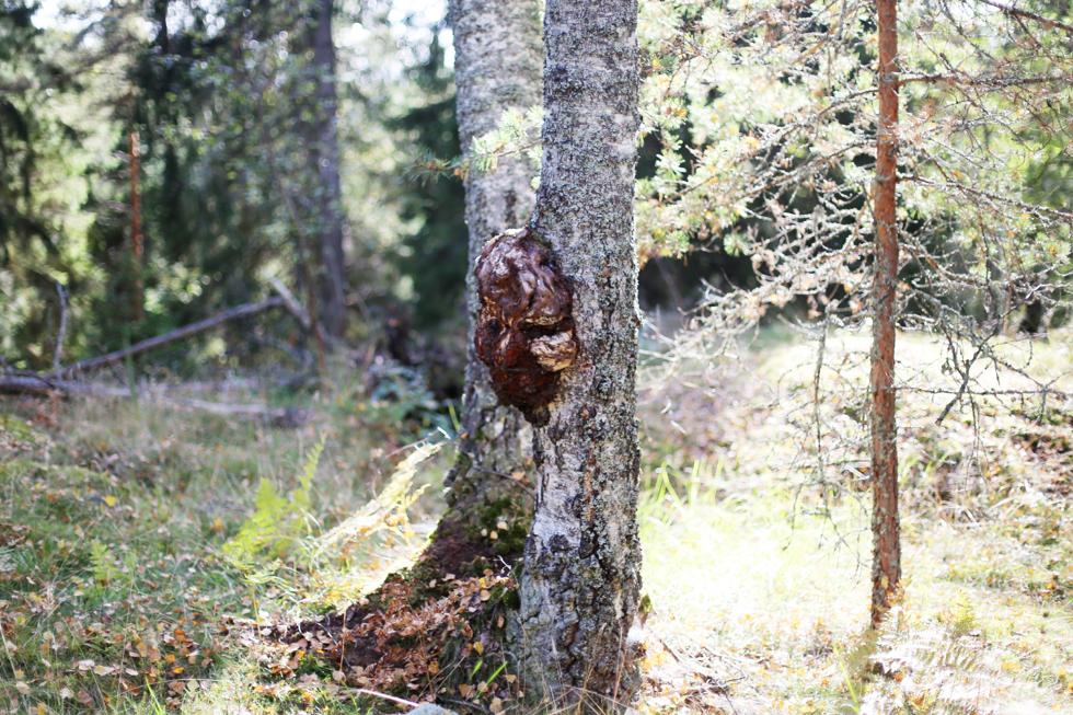 söndag i skogen8