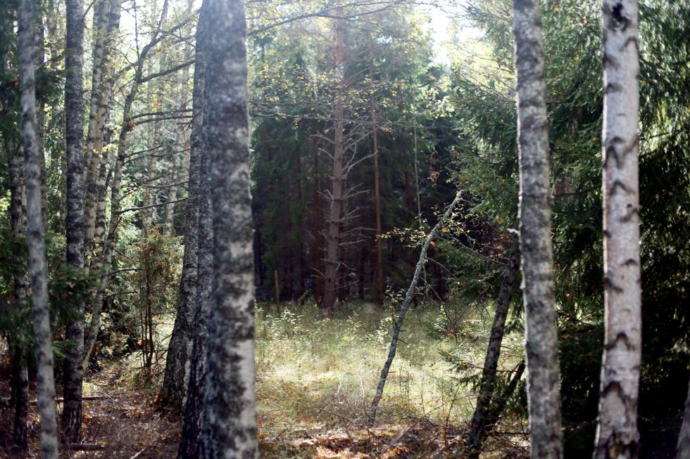 söndag i skogen9