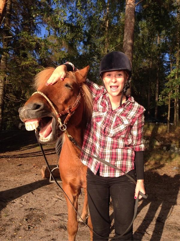häst_tänder