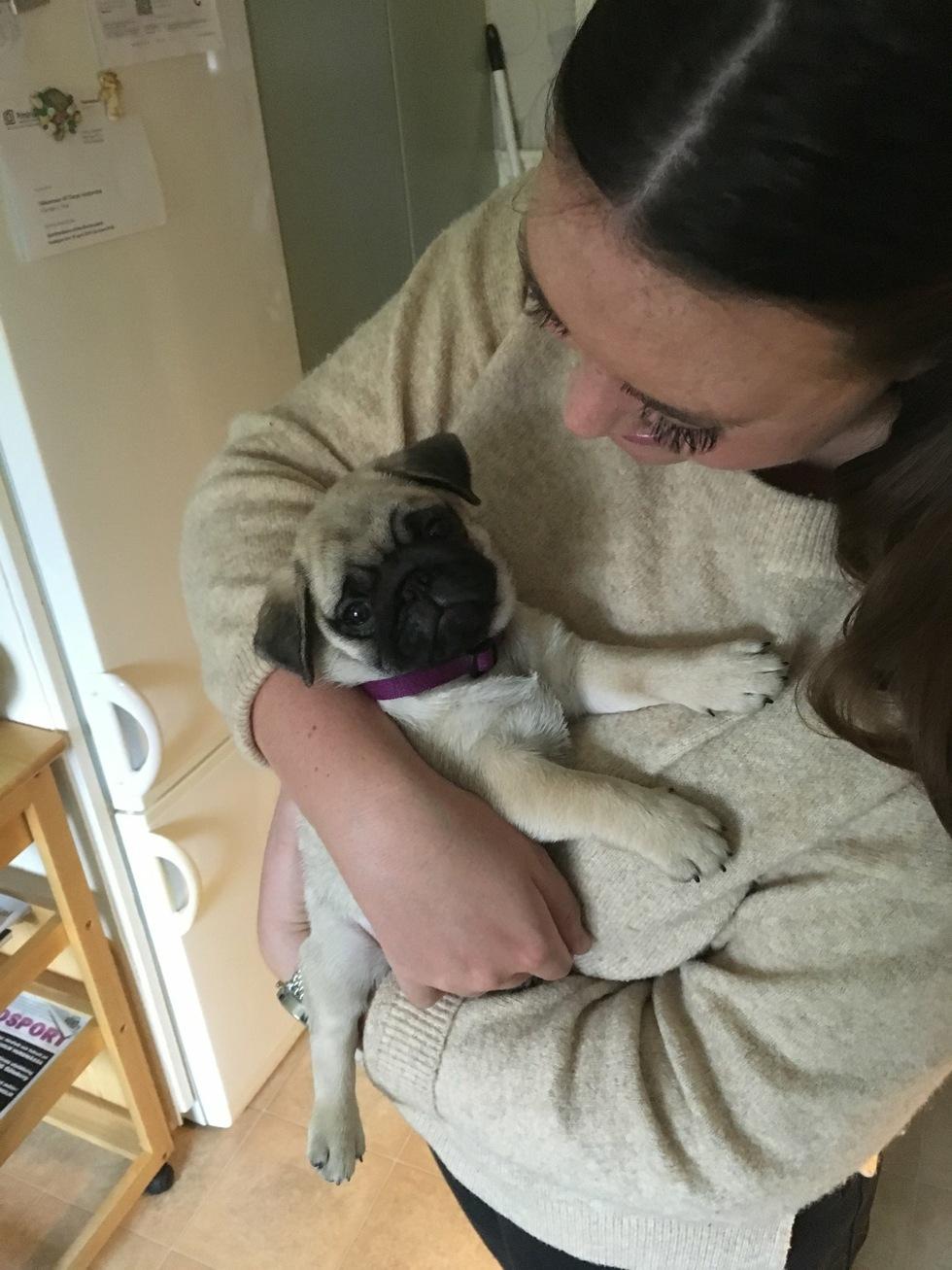 Nya Hemmet Hund Mops Bosse