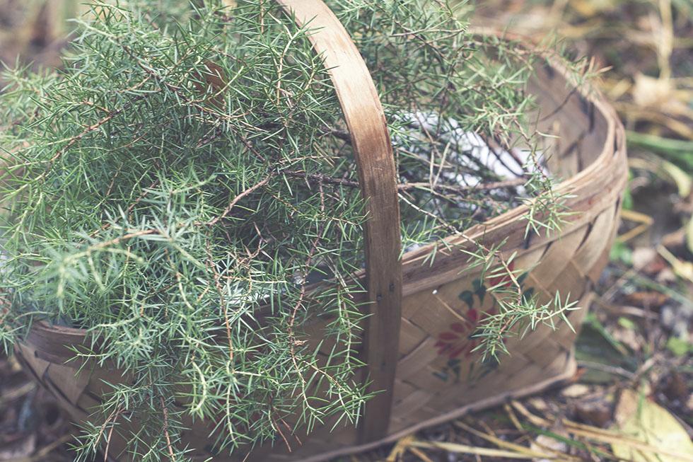 skogen hälsingland 2 IMG_7659