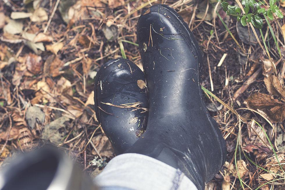 skogen hälsingland 2 IMG_7663