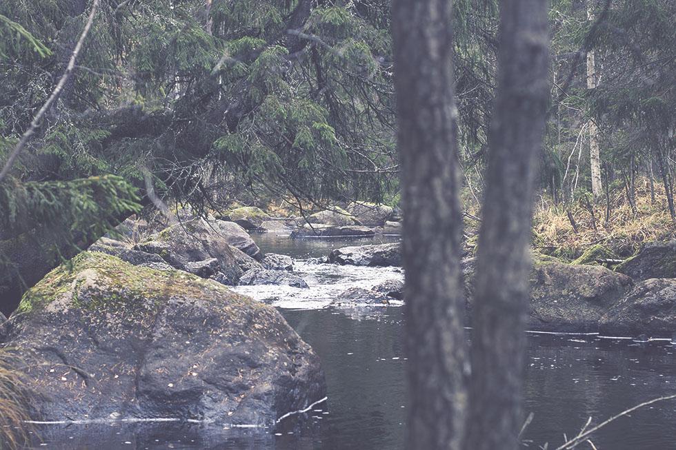 skogen hälsingland 2 IMG_7667