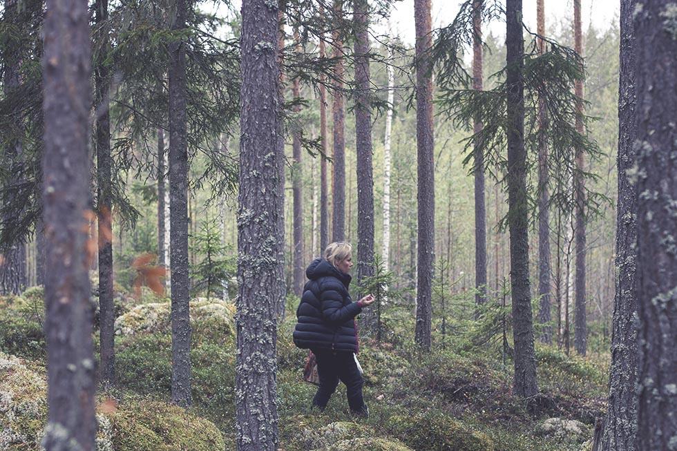 skogen hälsingland 2 IMG_7692