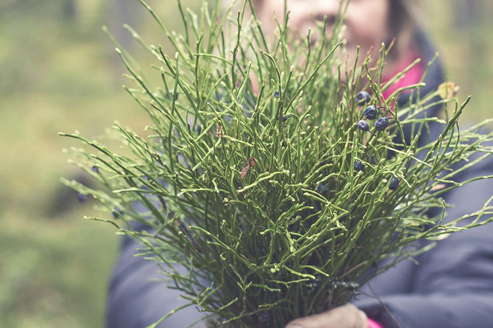 skogen hälsingland 2 IMG_7699