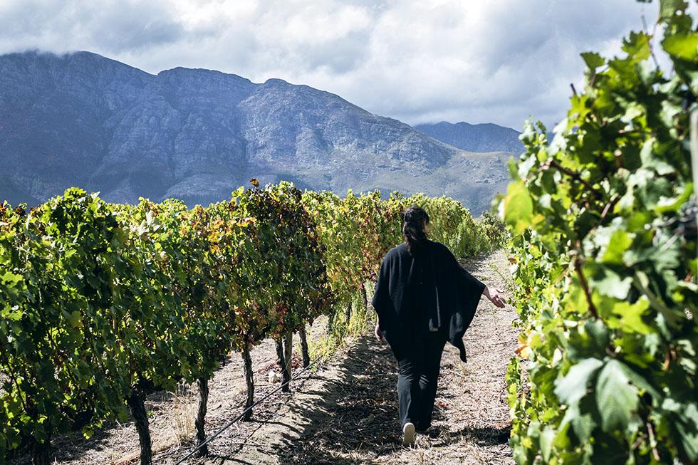 Franschhoek La Bri wine tasting