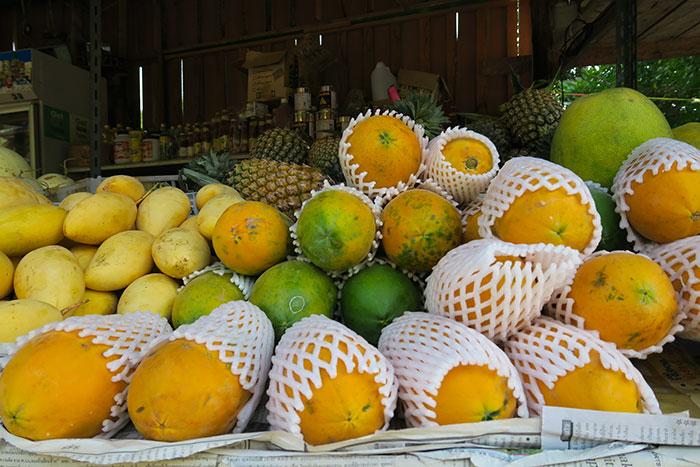 mango-koh-tao