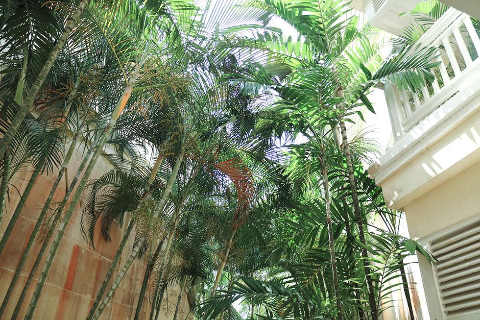 anja-forsnor-thailand-krabi-palmtree-garden