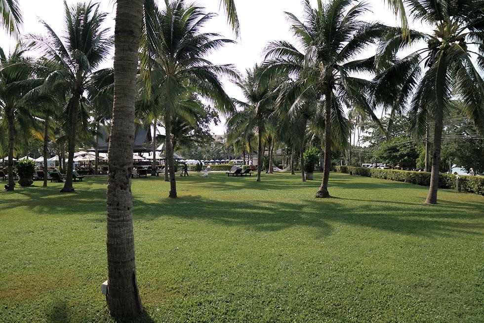 sofitel-krabi-palmtree-thailand