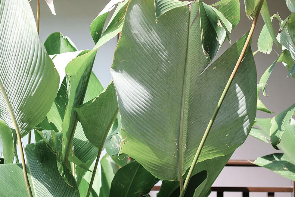 thailand-krabi-palm