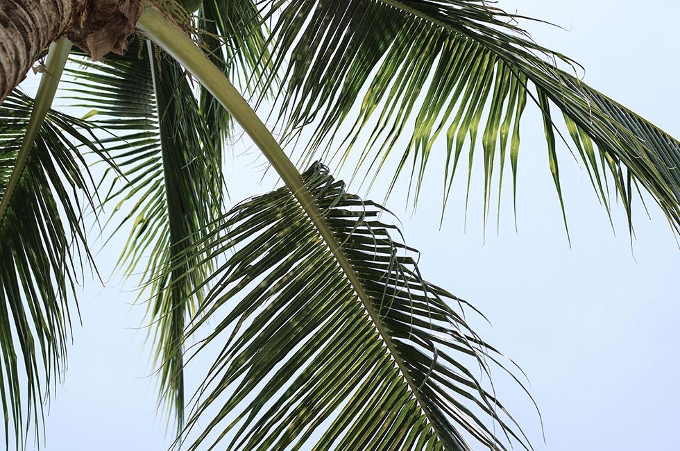 palmtree-thailand-krabi