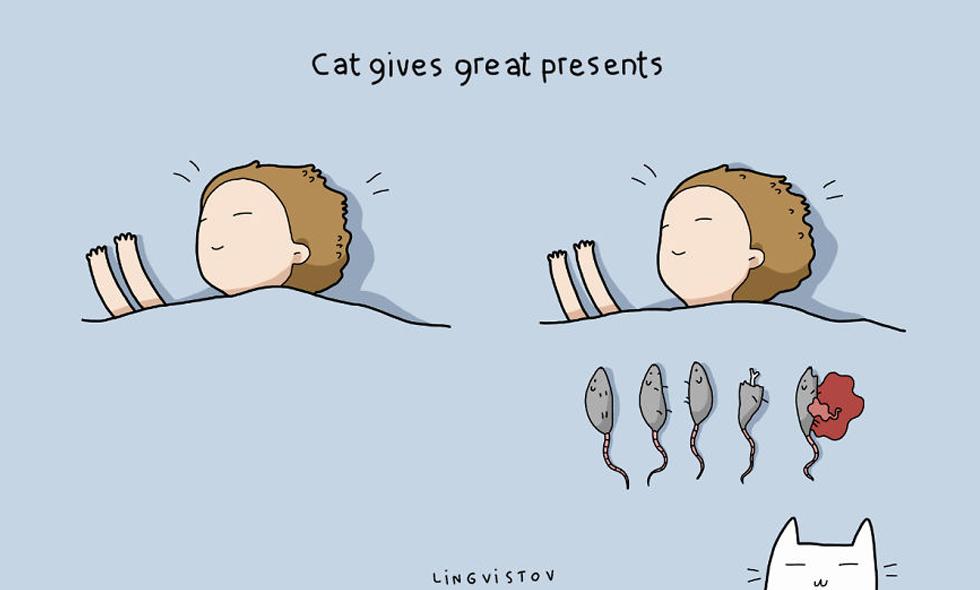 5 solklara (och roliga) anledningar till att skaffa en katt