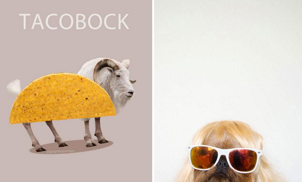8 Instagram-konton som garanterat kommer få dig att skratta