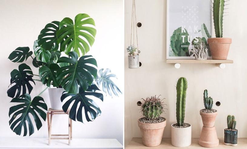 7 trendiga och lättskötta växter som ALLA kan sköta om